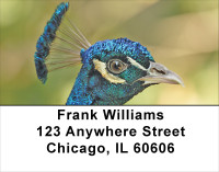 Peacock Parade Address Labels