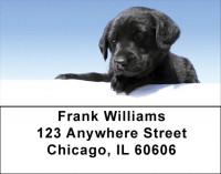 Black Lab Puppies Address Labels