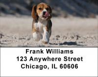 Brilliant Beagles Address Labels