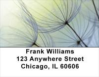 Dandelion Address Labels