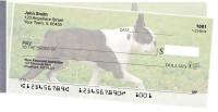 Boston Terrier Side Tear Checks
