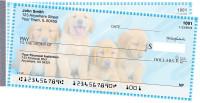 Golden Retriever Pups Keith Kimberlin Side Tear Checks
