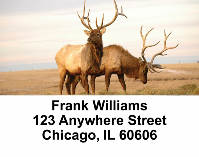 American Wildlife Address Labels | LBANI-08