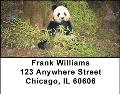 Panda Bears Address Labels | LBANI-11