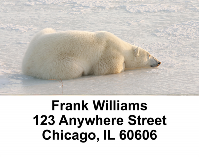 Polar Bears Address Labels | LBANI-13