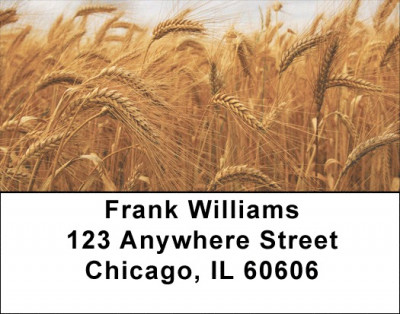Harvest Time Address Labels | LBFOD-07