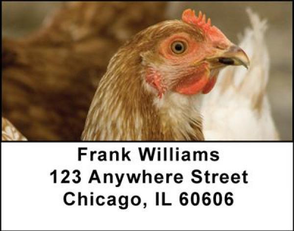 Chickens Address Labels