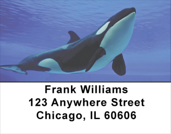 Whales Address Labels