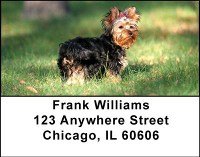 Yorkshire Terriers Address Labels