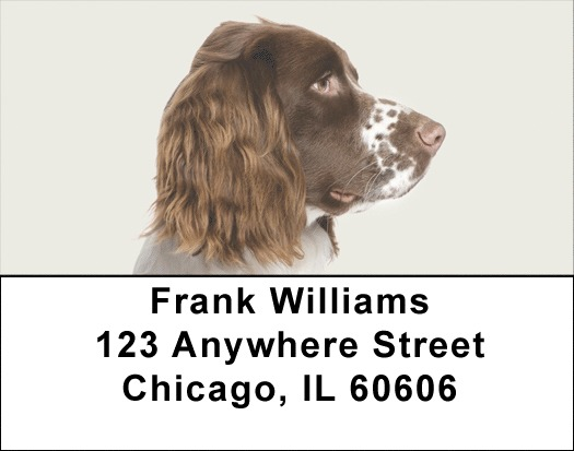 More English Spaniels Address Labels