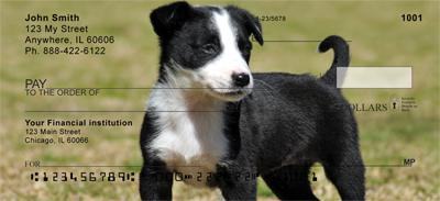 Border Collie Puppies Personal Checks