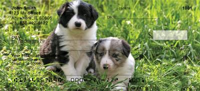 Border Collie Puppy Checks