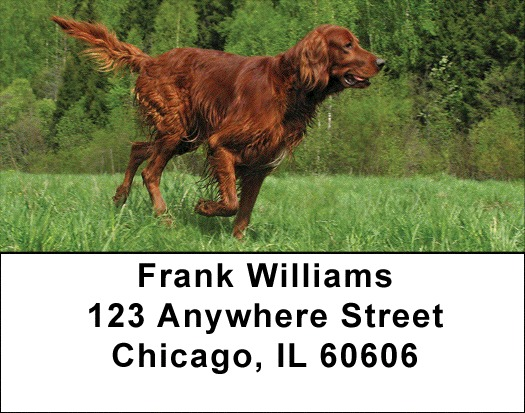 Irish Setter Address Labels