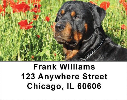 Rottweiler Address Labels