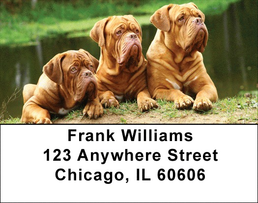 Majestic Mastiff Address Labels