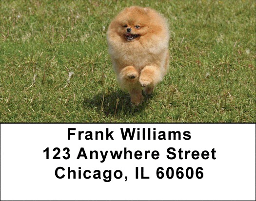 Pomeranian Address Labels