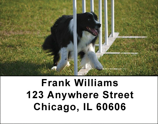 Agility Border Collies Address Labels