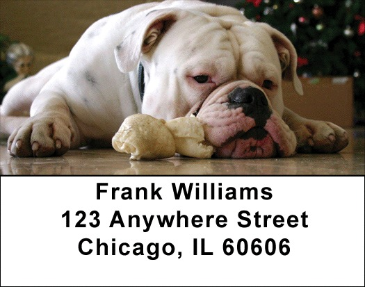 Cute English Bulldog Address Labels