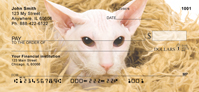 Hairless Sphynx Kittens Personal Checks