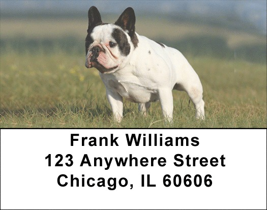 French Bulldog Address Labels