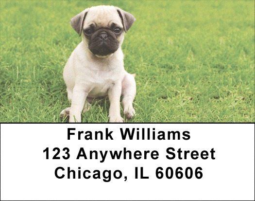 Pugs At The Park Address Labels