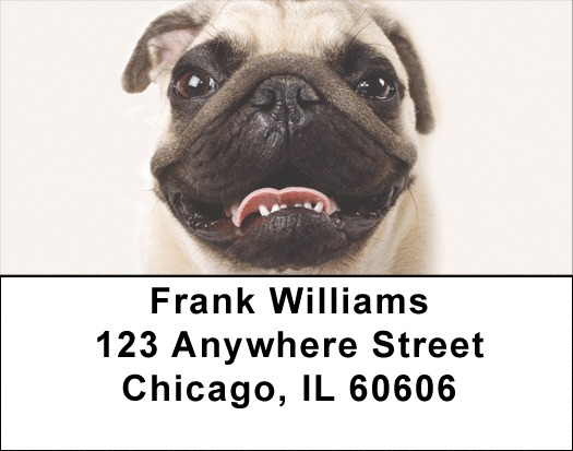 Pug Portraits Address Labels