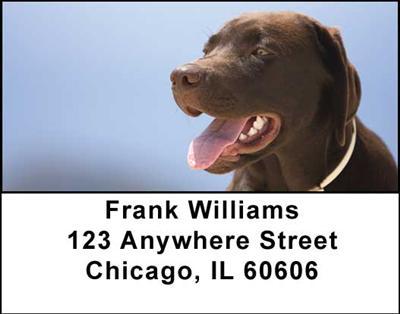 Chocolate Labradors Address Labels