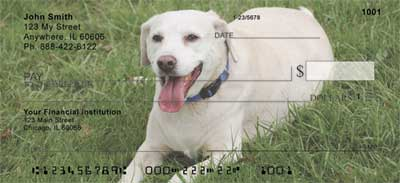 Yellow Labradors Personal Checks