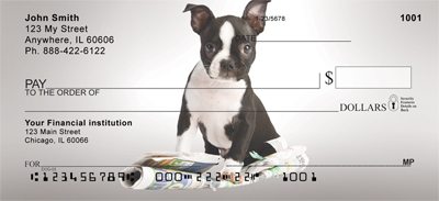 Cute Boston Terrier Puppy Checks