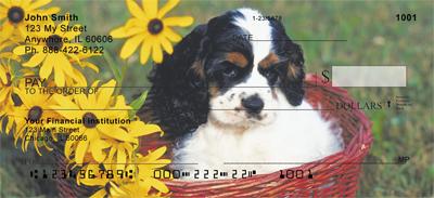 Cocker Spaniel Puppy Checks