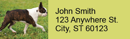 Boston Terrier Rectangle Address Labels