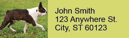 Boston Terrier Rectangle Address Labels