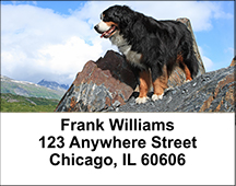 Bernese Mountain Dogs Address Labels