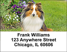 Shetland Sheepdog Address Labels
