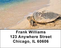 Sea Turtles Address Labels