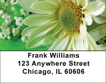 Daisies On Green Address Labels