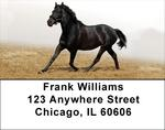 Black Stallions Address Labels