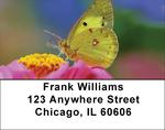Butterfly Dreams Address Labels