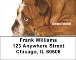 Bulldogs With Marine Attitude Address Labels