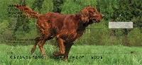 Irish Setter Personal Checks