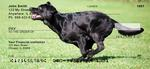 Brilliant Black Labs Personal Checks