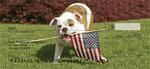 Romping English Bulldogs  Personal Checks