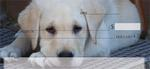 Yellow Lab Puppies Personal Checks $ 12.99