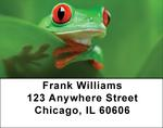 More Tree Frogs Address Labels