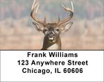 Big Horned Buck Deer Address Labels