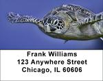 Sea Turtles Under Water Address Labels