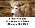 Whippet Address Labels