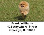 Pomeranian Address Labels