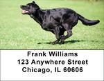 Brilliant Black Labs Address Labels