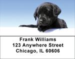 Labrador Retriever Address Labels - Black Lab Puppy Labels